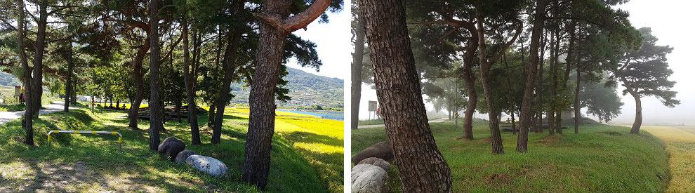 숲-합3.jpg